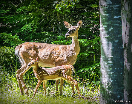 Doe and Fawn by Ken Morris