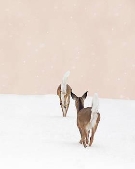 Doe in Winter on Blush Pink by Brooke T Ryan