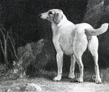 George Stubbs - Dog, 1788