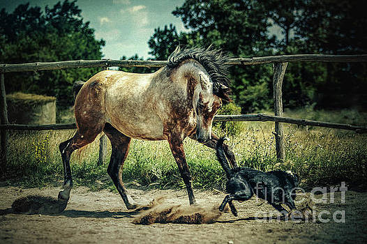 Dimitar Hristov - Dog and horse playing together