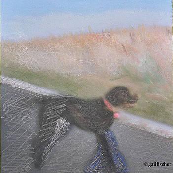 Dog at Millenium Park by Gail Fischer