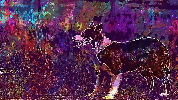 Dog Border Collie Looking Playing  by PixBreak Art