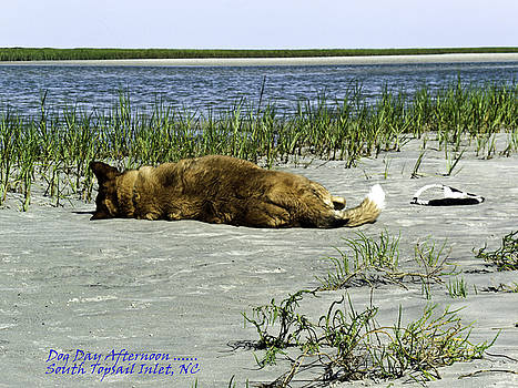 Dog Day Afternoon South Topsail Beach NC by Crissy Anderson