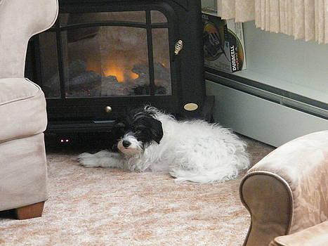 Dog Days of Winter by Paula Giampola