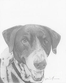 Dog Drawing Orion by Dave Nevue