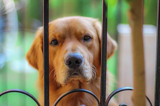 Dog by Ehab Amin