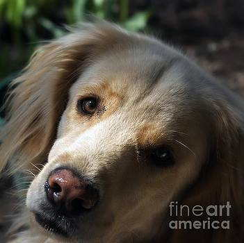 Dog Eyes by Frank J Casella