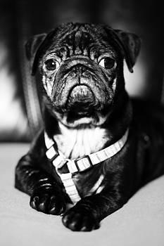 Dog by Falko Follert