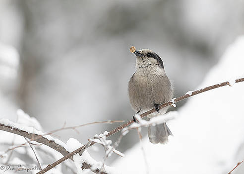 Dee Carpenter - Dog Food for the Gray Jay