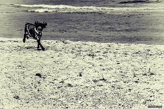 Dog Frolicking on a Beach by Ken Morris