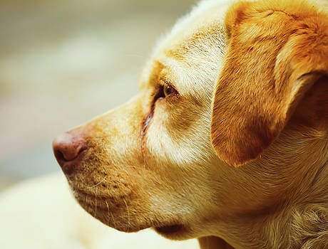 Dog by Hyuntae Kim