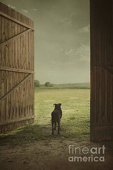 Dog in countryside by Mythja Photography