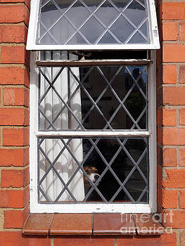Dog in the window by Louise Heusinkveld