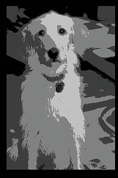 Dog Labradoodle by Patricia Frankel