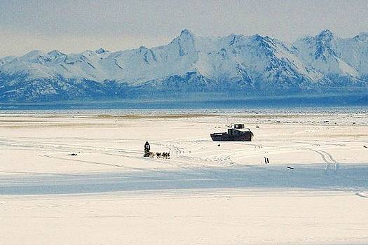 Dog Musher at Cook Inlet - Alaska by Juergen Weiss