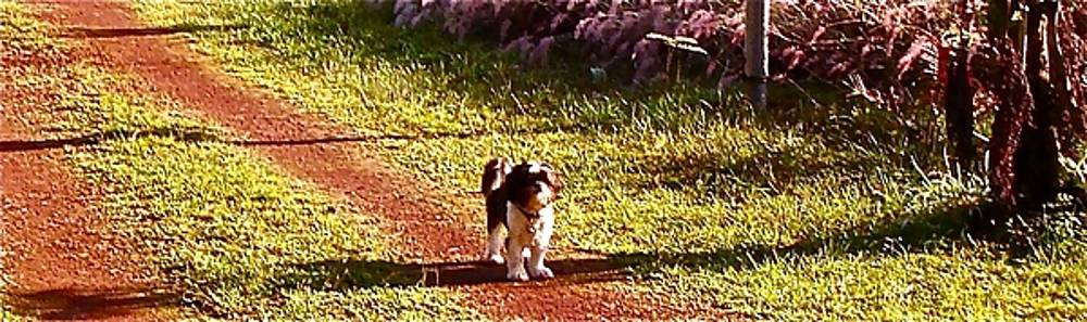 Dog on the Driveway by Chuck Snyder