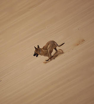 Dog on the dune by Jaqueline Briel