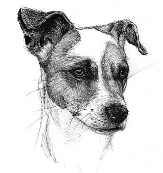 Dog Portrait by David Joffe