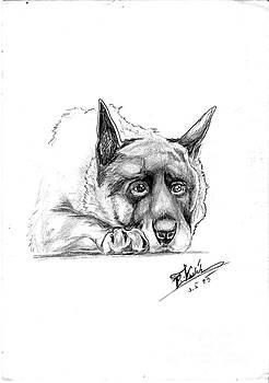 Dog Portrait by Peter Kulik