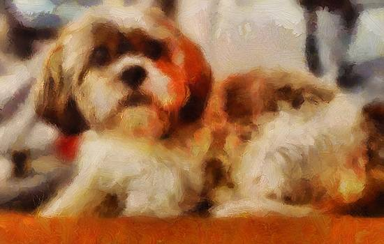 Dog Portrait Shih Tzu resting curled in orange and brown in acrylic and soft brush strokes by MendyZ