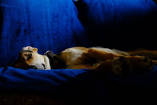 Resting dog by Fabrizio Troiani