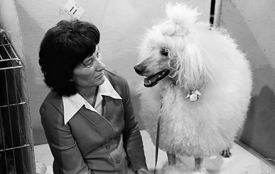 Dog Show 1 by David Gilbert
