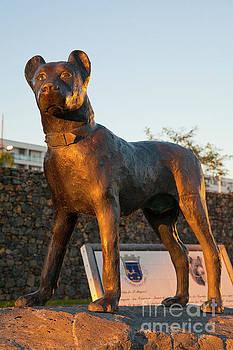 Dog statue by Gaspar Avila