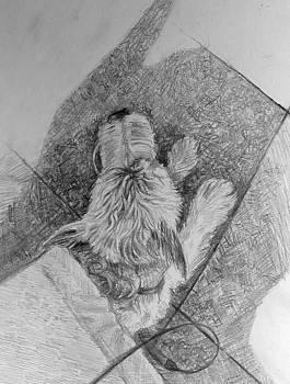 Dog under Bench by William Hay