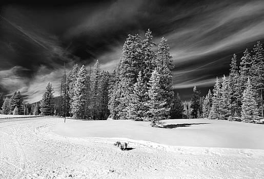Dog vs Mountain by Jamieson Brown