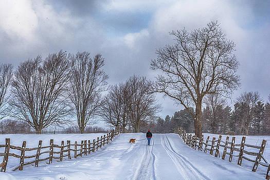 Dog Walking by Guy Whiteley