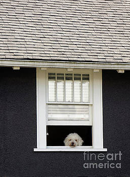 Doggy in the Window by John  Mitchell