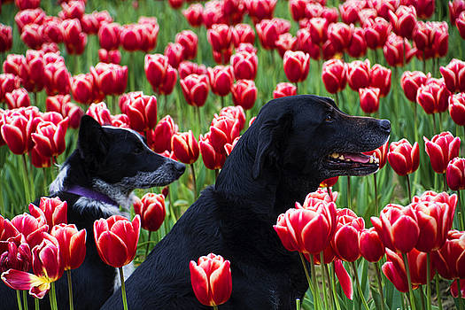Dogs and Tulips by Helen Worley