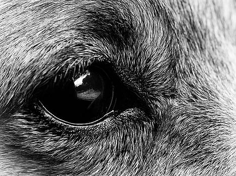 Dogs Eye View by Nick Bywater