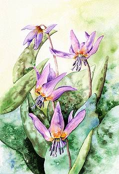 Dog's tooth Violet by Lynne Henderson