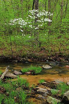 Dogwood Along Pickle Creek by Greg Matchick