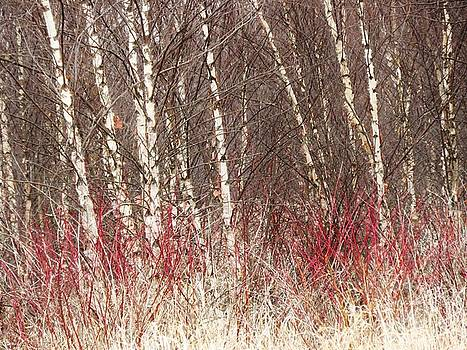 Dogwood and Birch  by Lori Frisch