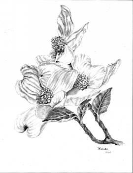 Dogwood Blossom by Brenda Hill