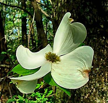 Dogwood Blossom II by Julie Dant