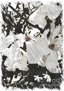Dogwood Blossom by Julie Knapp