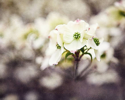Lisa Russo - Dogwood Blossom