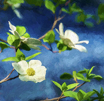 Dogwood Blossoms at the River by Jan Hagan
