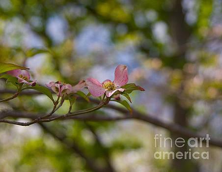 Dogwood Branch by Julia Rigler