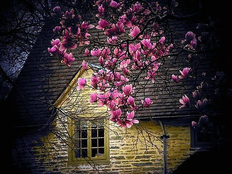 Dogwood by the Window by Joyce Kimble Smith