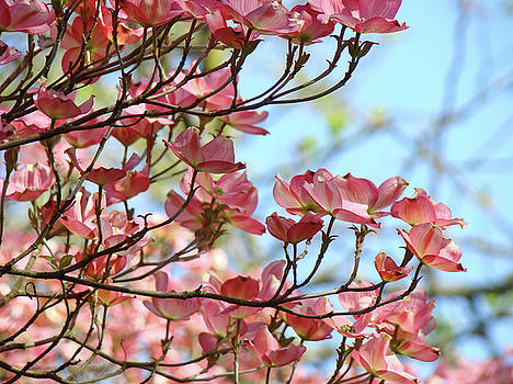 Baslee Troutman - Dogwood Flowering Trees Pink Dogwood Flowers Baslee Troutman