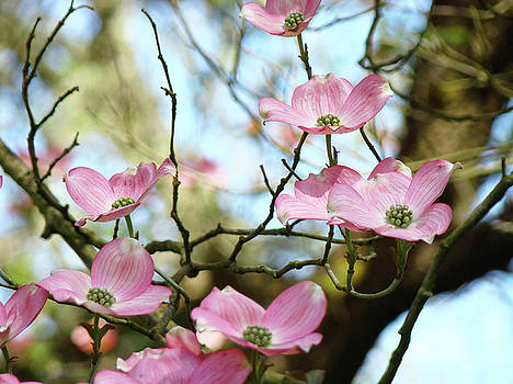 Baslee Troutman - Dogwood Flowers Pink Dogwood Tree Landscape 9 Giclee Art Prints Baslee Troutman