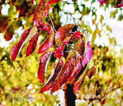 Dogwood Leaves by MaryLee Parker