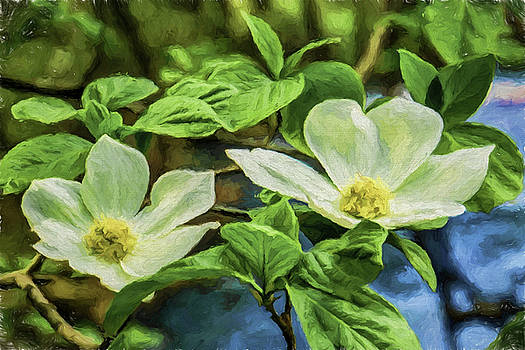 Jan Hagan - Dogwood painted image