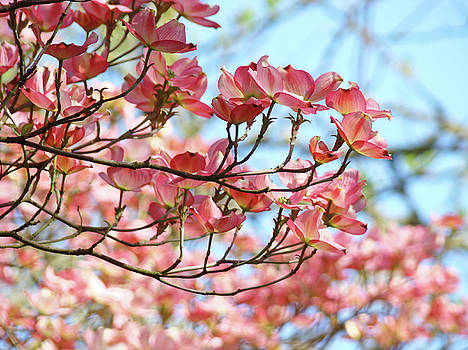 Baslee Troutman - Dogwood Tree Landscape Pink Dogwood Flowers Art