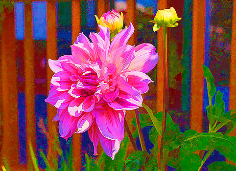 Dolled Up Dahlia by Judy Wright Lott