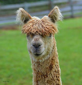 Kathy Kelly - Dolly Llama